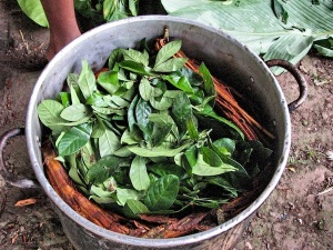 Ayahuasca brewing